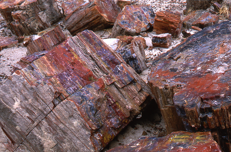 Petrified Forest)