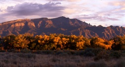 Sandia Mountains and Rio Grande Cottonwoods at Sunset