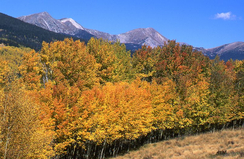 Truchas Peaks with aspens