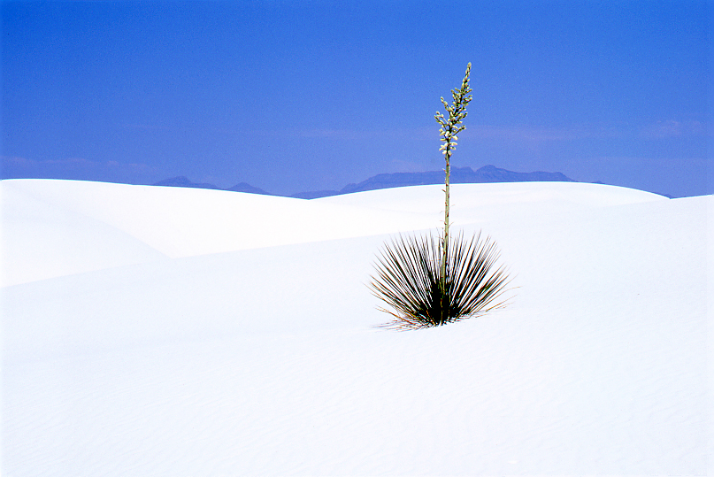 White Sands Near Midday