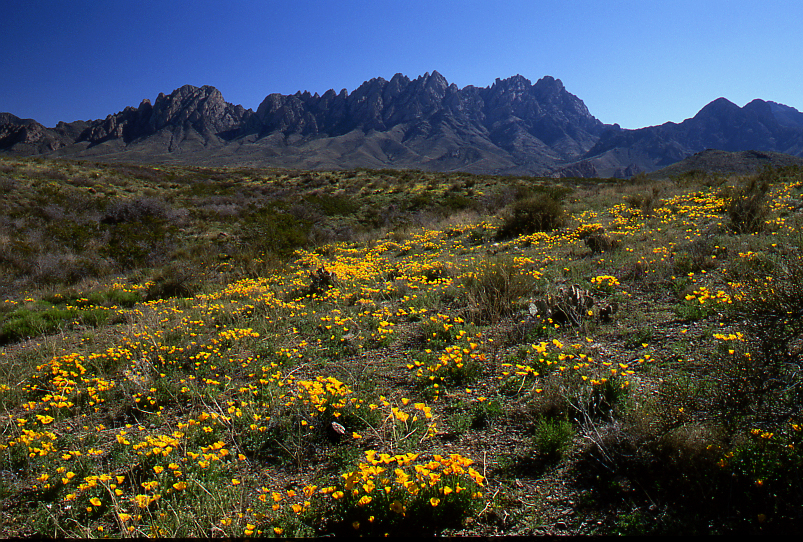 Organ Mountains with Mexican Gold Popies